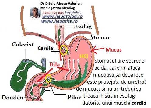 Aciditatea stomacului