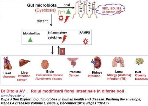 flora intestinala si bolile umane