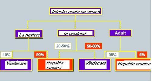 INFECTIE CU VIRUSb
